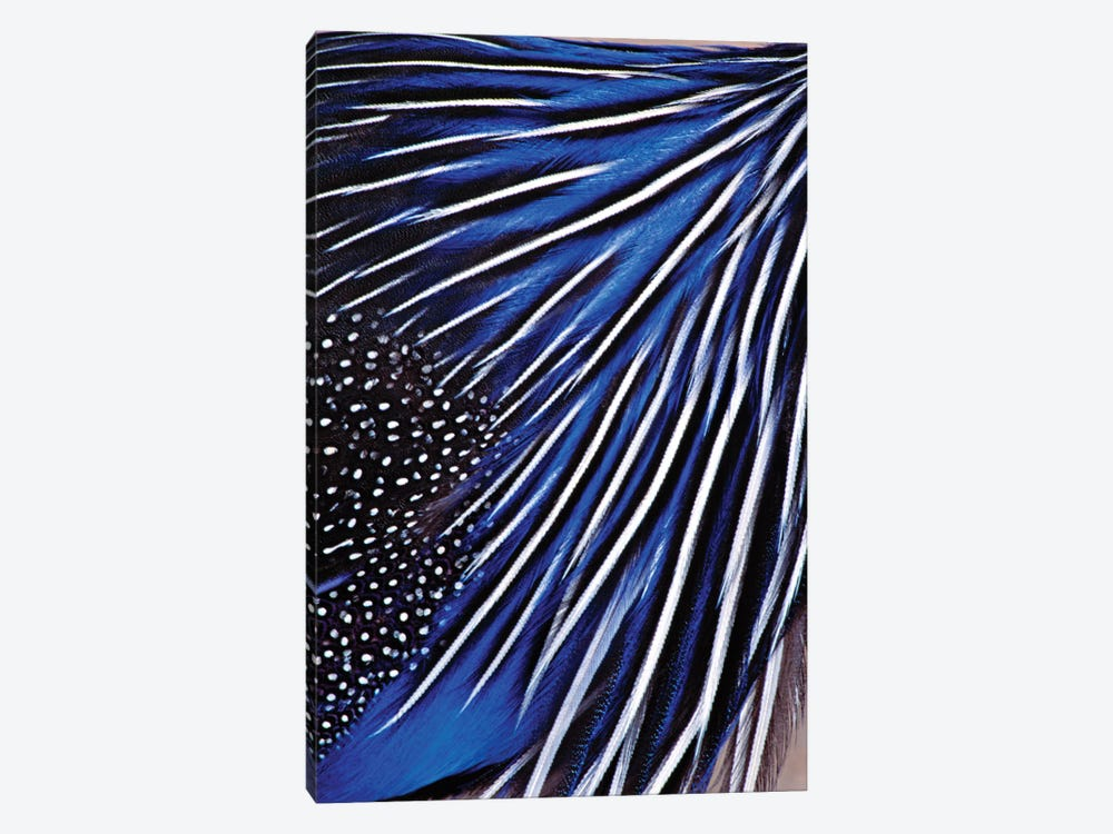 Guinea Fowl by Panoramic Images 1-piece Canvas Artwork