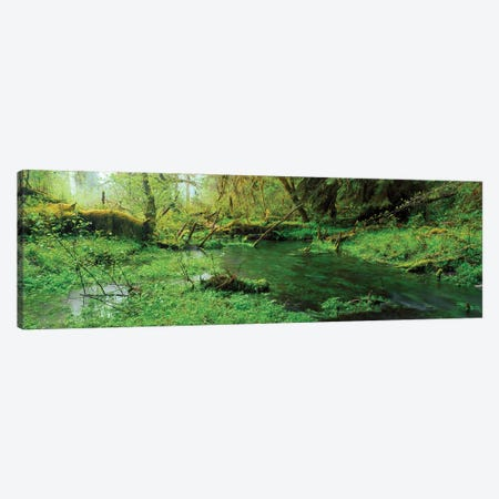 Hoh Rain Forest Olympic National Park WA Canvas Print #PIM15962} by Panoramic Images Art Print