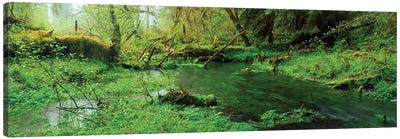 Hoh Rain Forest Olympic National Park WA Canvas Art Print