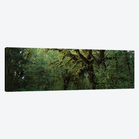 Hoh Rain Forest WA Canvas Print #PIM15963} by Panoramic Images Canvas Art Print
