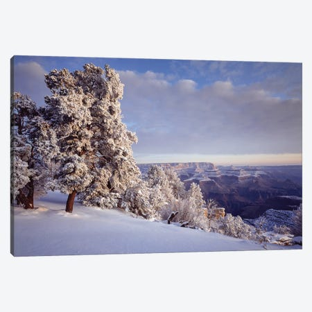 Pinyon Pine Trees Covered In Snow In Winter, South Rim, Grand Canyon National Park, Arizona, USA Canvas Print #PIM16009} by Panoramic Images Canvas Art