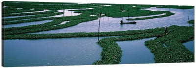 Seaweed Cultivation In A Fish Farm, Phnom Penh, Cambodia Canvas Art Print