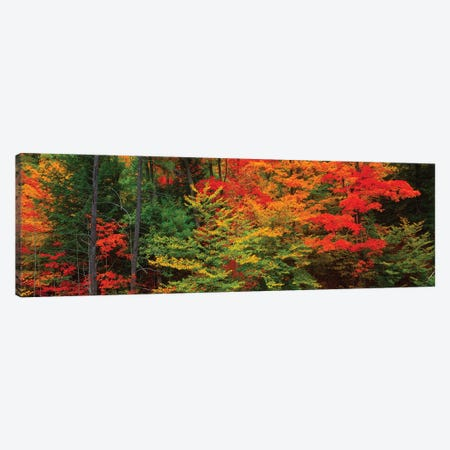 Trees In A Forest During Autumn, Tibbetts Memorial State Forest, Pittstown, Rensselaer County, New York, USA 3-Piece Canvas #PIM16041} by Panoramic Images Canvas Wall Art