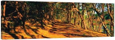 Trees In A Forest, Beech Forest Trail, Provincetown, Cape Cod, Barnstable County, Massachusetts, USA Canvas Art Print