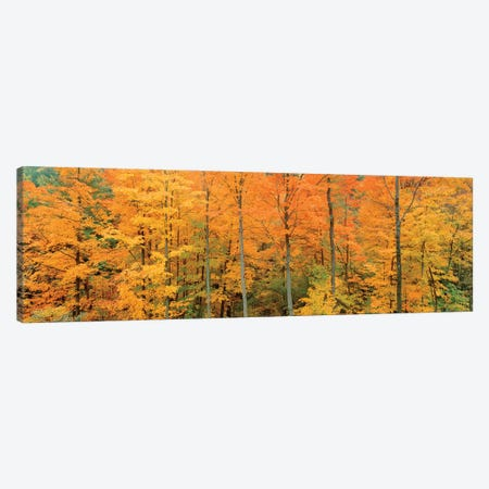 Trees In A Forest, Memorial State Forest, New York, USA 3-Piece Canvas #PIM16043} by Panoramic Images Canvas Art