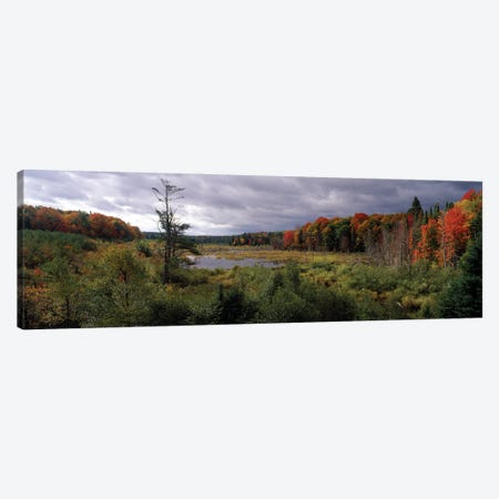 Trees In A Forest, Ottawa National Forest, North Woods, Upper Peninsula, Michigan, USA Canvas Print #PIM16044} by Panoramic Images Canvas Print