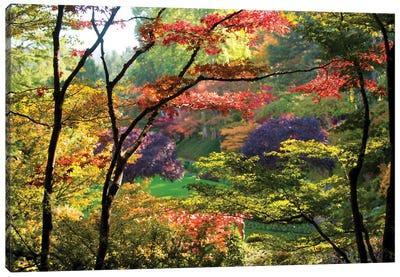 Trees In A Garden, Butchart Gardens, Victoria, Vancouver Island, British Columbia, Canada Canvas Art Print