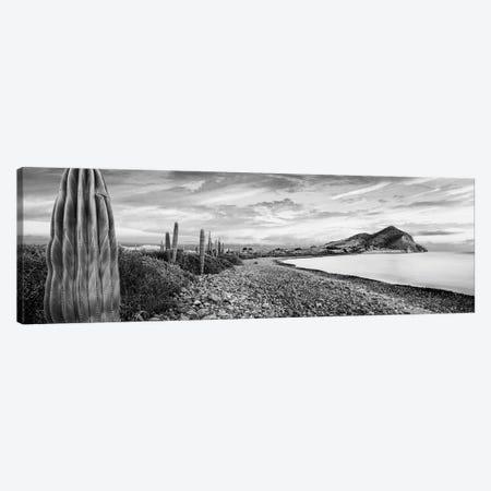 Cardon Cacti Line Along The Coast, Bay Of Concepcion, Sea Of Cortez, Mulege, Baja California Sur, Mexico Canvas Print #PIM16132} by Panoramic Images Canvas Artwork