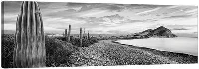 Cardon Cacti Line Along The Coast, Bay Of Concepcion, Sea Of Cortez, Mulege, Baja California Sur, Mexico Canvas Art Print