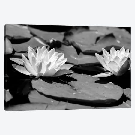 Common Water Lily floating On Water Canvas Print #PIM16147} by Panoramic Images Canvas Artwork