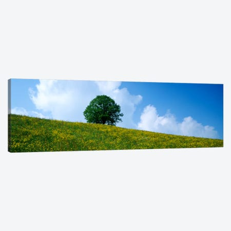 Green Hill w/ flowers & tree Canton Zug Switzerland Canvas Print #PIM161} by Panoramic Images Canvas Print