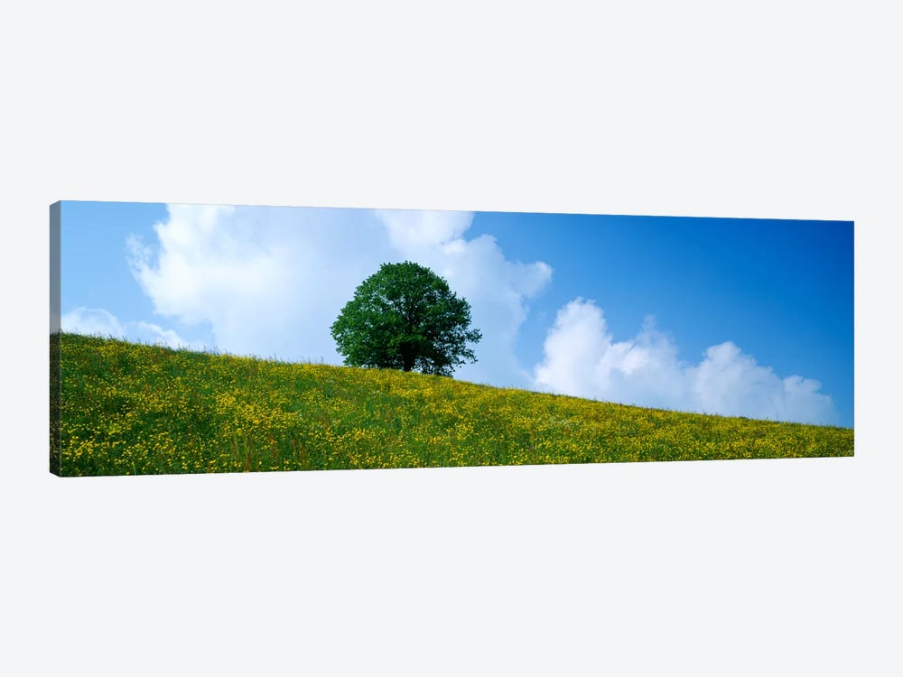 Green Hill w/ flowers & tree Canton Zug Switzerland by Panoramic Images 1-piece Canvas Wall Art