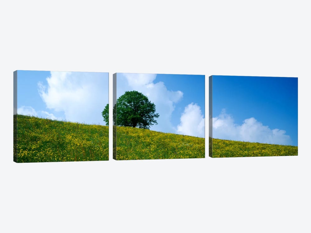 Green Hill w/ flowers & tree Canton Zug Switzerland by Panoramic Images 3-piece Canvas Art
