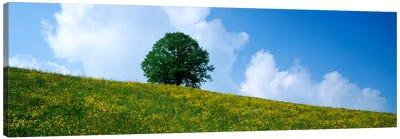 Green Hill w/ flowers & tree Canton Zug Switzerland Canvas Art Print