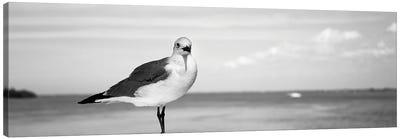Seagull At The Seaside, Florida, USA Canvas Art Print