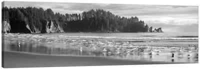 Seagulls On Beach, Second Beach, Olympic National Park, Washington, USA Canvas Art Print