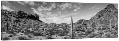 Various Cactus Plants In A Desert, Organ Pipe Cactus National Monument, Arizona, USA Canvas Art Print