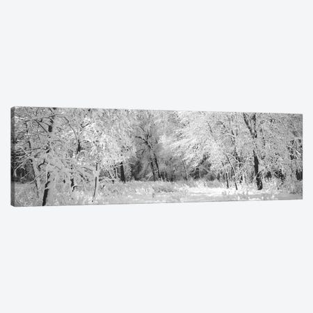 Winter, Forest, Yosemite National Park, California, USA Canvas Print #PIM16274} by Panoramic Images Canvas Artwork