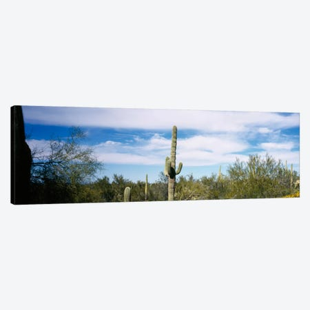 Desert Landscape, Organ Pipe Cactus National Monument, Arizona, USA Canvas Print #PIM1729} by Panoramic Images Canvas Wall Art