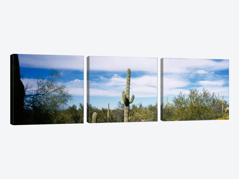 Desert Landscape, Organ Pipe Cactus National Monument, Arizona, USA by Panoramic Images 3-piece Canvas Wall Art
