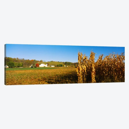 Corn Field During Harvest, Ohio, USA Canvas Print #PIM173} by Panoramic Images Canvas Art