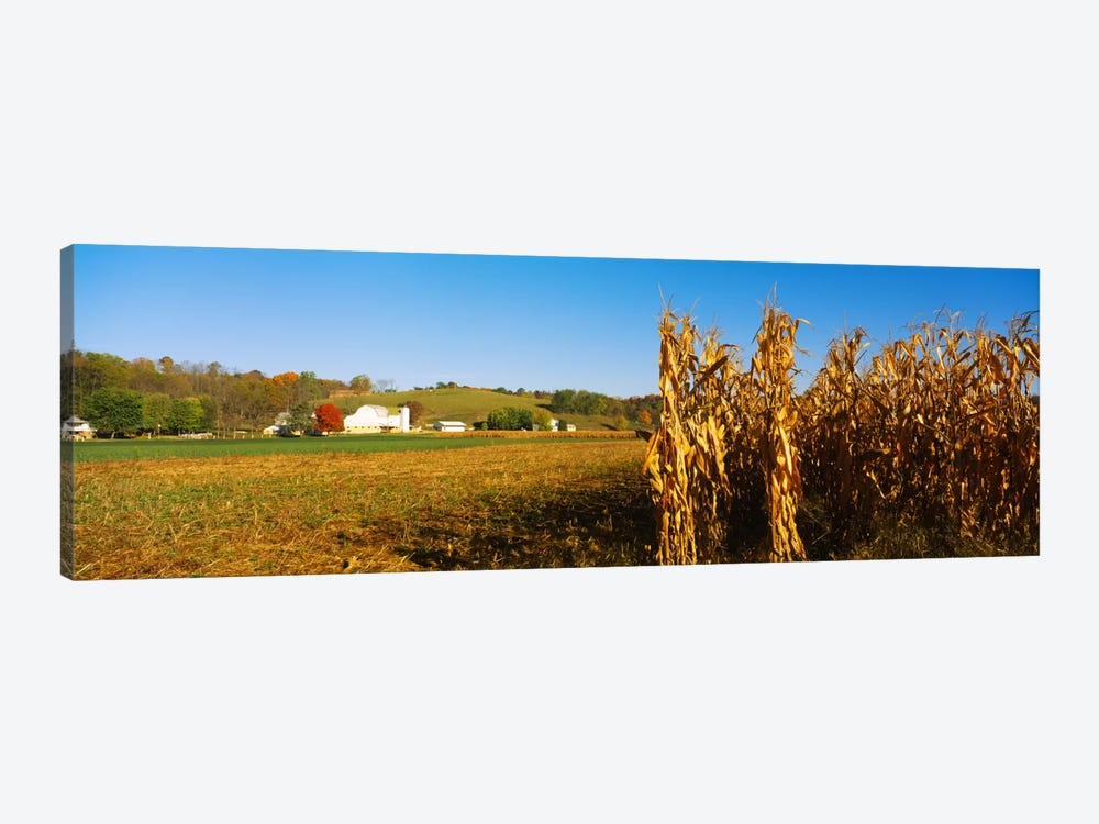 Corn Field During Harvest, Ohio, USA by Panoramic Images 1-piece Art Print