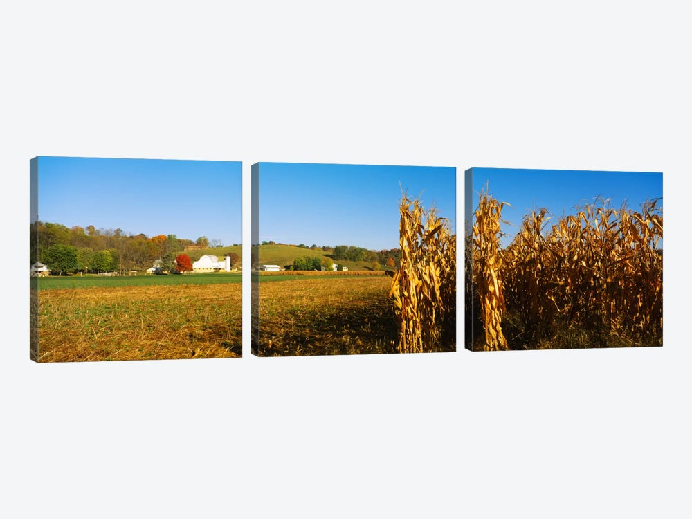 Corn Field During Harvest, Ohio, USA 3-piece Canvas Art Print