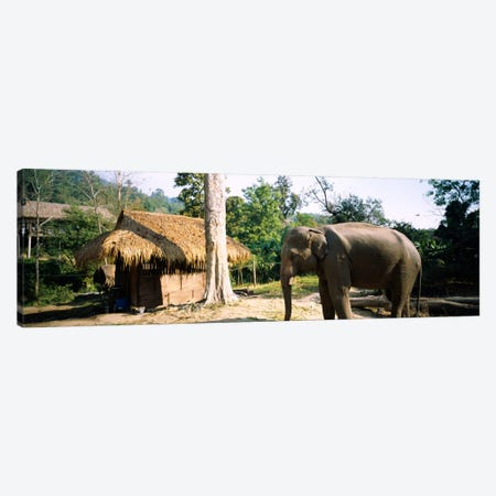 Elephant standing outside a hut in a village, Chiang Mai, Thailand Canvas Print #PIM174} by Panoramic Images Canvas Print