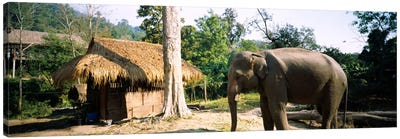 Elephant standing outside a hut in a village, Chiang Mai, Thailand Canvas Art Print
