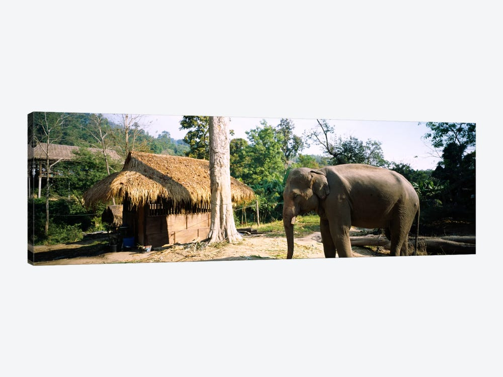 Elephant standing outside a hut in a village, Chiang Mai, Thailand by Panoramic Images 1-piece Canvas Wall Art