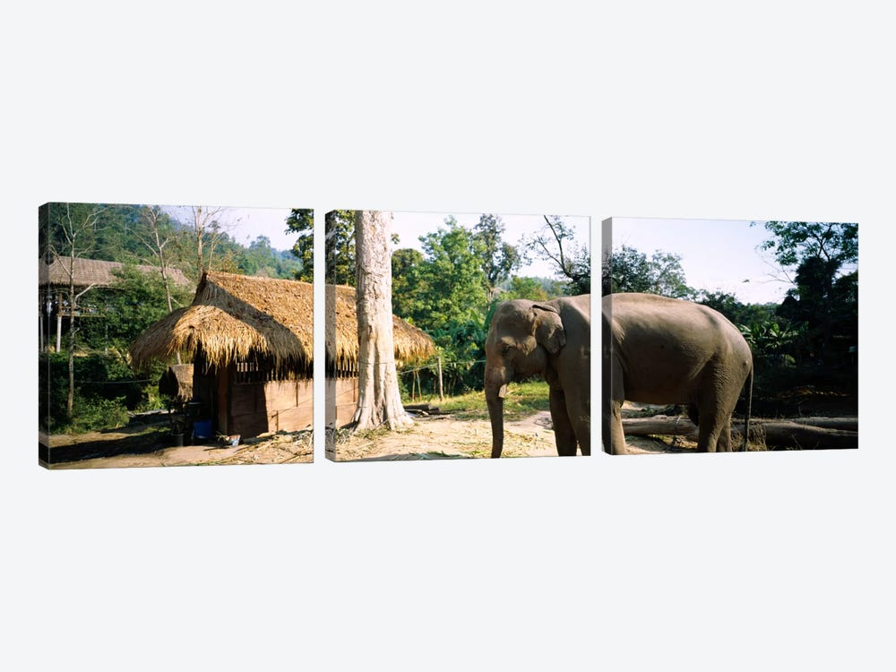 Elephant standing outside a hut in a village, Chiang Mai, Thailand by Panoramic Images 3-piece Canvas Art