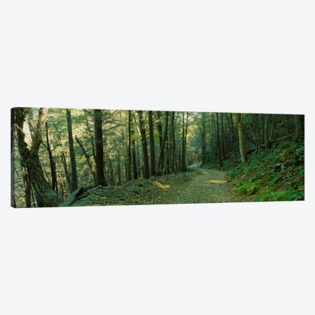 Trees In A National Park, Shenandoah National Park, Virginia, USA Canvas Print #PIM1751} by Panoramic Images Art Print