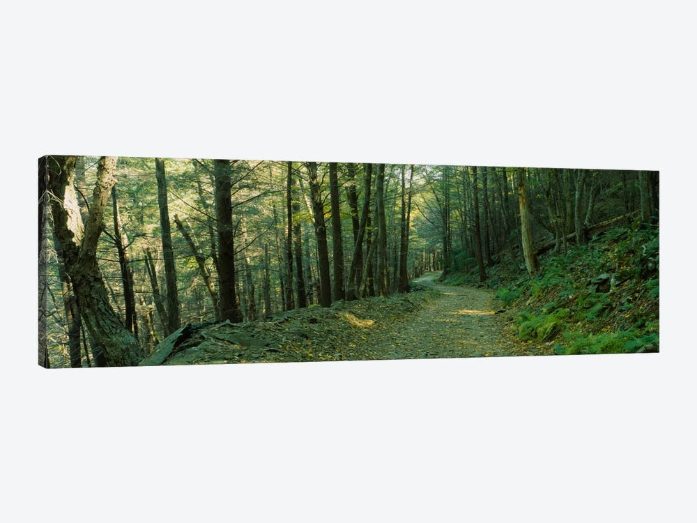 Trees In A National Park, Shenandoah National Park, Virginia, USA by Panoramic Images 1-piece Art Print