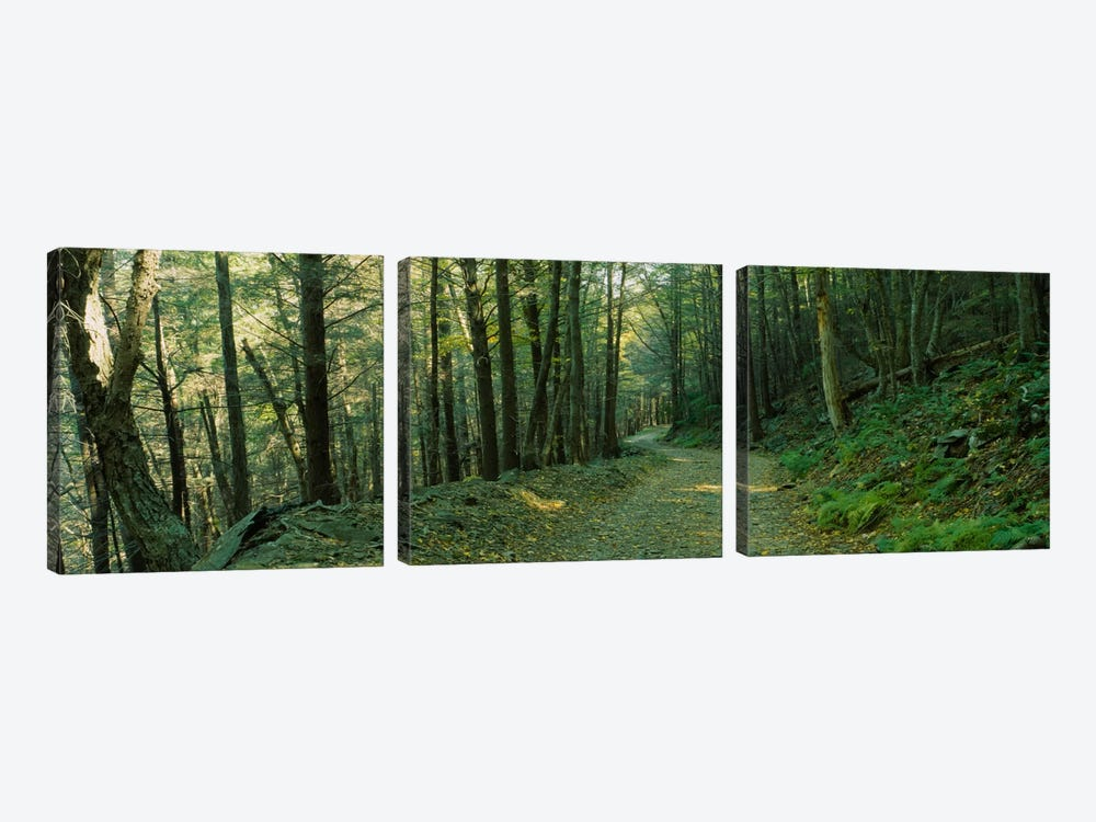 Trees In A National Park, Shenandoah National Park, Virginia, USA by Panoramic Images 3-piece Art Print