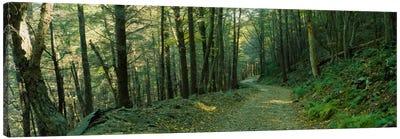 Trees In A National Park, Shenandoah National Park, Virginia, USA Canvas Art Print