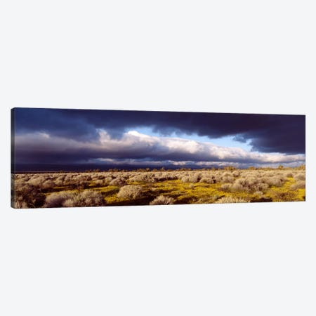 Ominous Sky, Mojave Desert, California, USA Canvas Print #PIM1752} by Panoramic Images Art Print