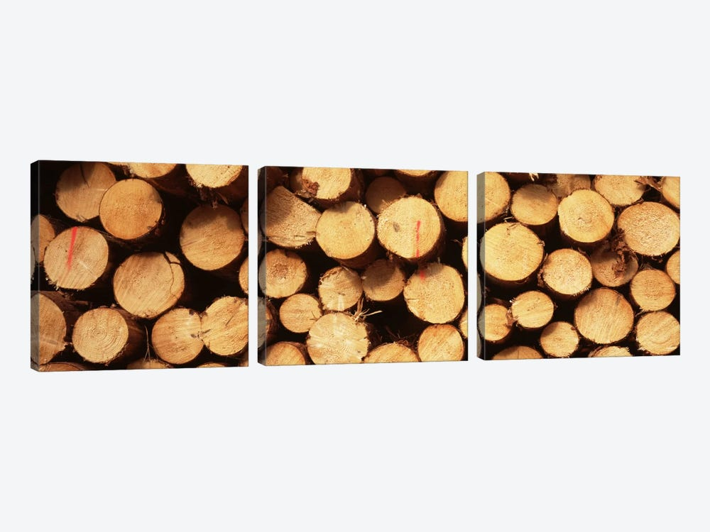 Lumbered Timber Pile, Germany by Panoramic Images 3-piece Canvas Print