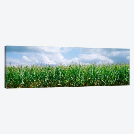 Clouds over a corn field, Christian County, Illinois, USA Canvas Print #PIM1784} by Panoramic Images Art Print