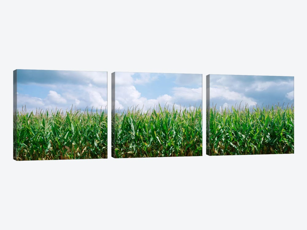 Clouds over a corn field, Christian County, Illinois, USA by Panoramic Images 3-piece Art Print