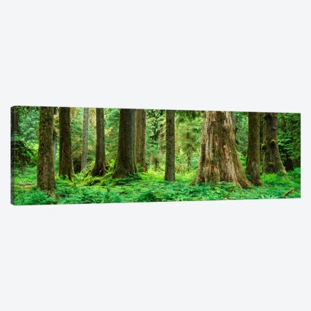 Trees in a rainforest, Hoh Rainforest, Olympic National Park, Washington State, USA Canvas Print #PIM1831} by Panoramic Images Canvas Wall Art