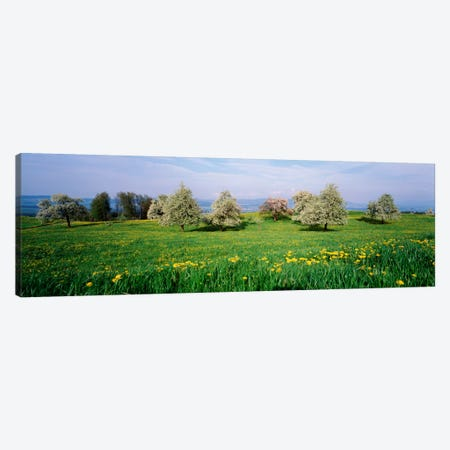 Peartrees Fields Aargau Switzerland Canvas Print #PIM1917} by Panoramic Images Canvas Art