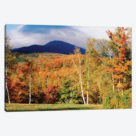 Autumn Landscape, White Mountain National Forest, New Hampshire, USA Canvas Print #PIM1942} by Panoramic Images Canvas Art