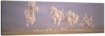 Birch Trees w\ rime Switzerland Canvas Print #PIM1973