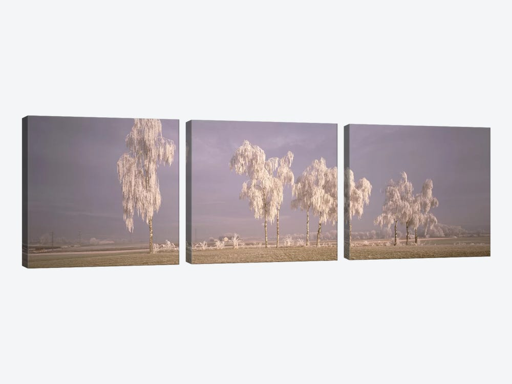 Birch Trees w\ rime Switzerland by Panoramic Images 3-piece Canvas Art