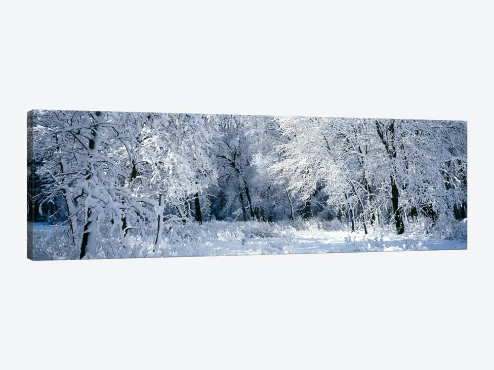 Winter, Forest, Yosemite National Park, California, USA by Panoramic Images 1-piece Canvas Wall Art