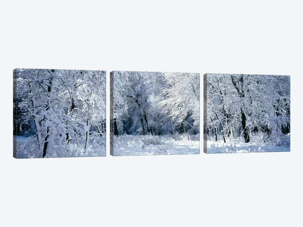 Winter, Forest, Yosemite National Park, California, USA by Panoramic Images 3-piece Canvas Art