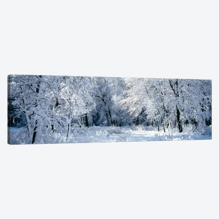 Winter, Forest, Yosemite National Park, California, USA Canvas Print #PIM2019} by Panoramic Images Canvas Artwork