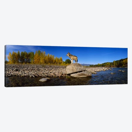 Wolf standing on a rock at the riverbankUS Glacier National Park, Montana, USA Canvas Print #PIM2051} by Panoramic Images Canvas Art