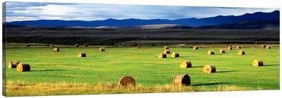 Field Of Haystacks, Jackson County, Colorado, USA Canvas Print #PIM2075