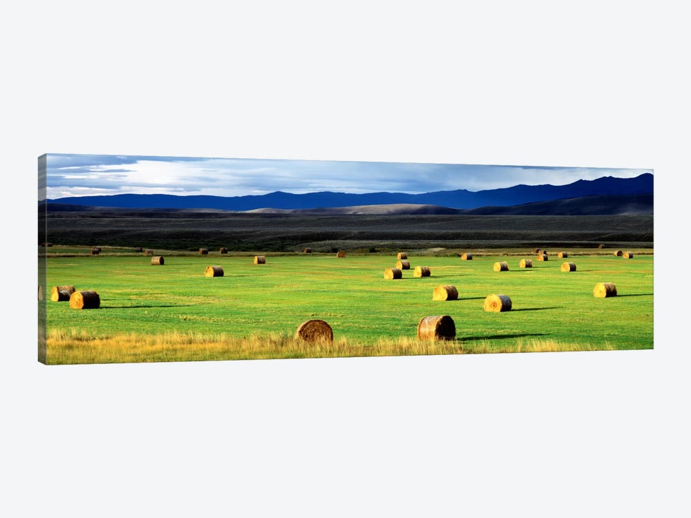 Field Of Haystacks, Jackson County, Colorado, USA by Panoramic Images 1-piece Canvas Art